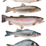 Fische - Vitamin D